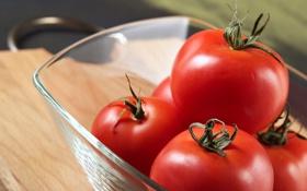 Обои еда, миска, помидоры