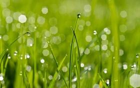 Картинка зелень, трава, капли, роса, блики, боке