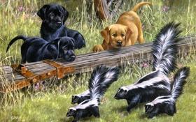 Картинка собаки, щенки, арт, Puppy Le Pu, Roger Cruwys, скунсы