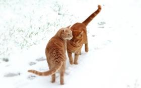 Обои поле, снег, кошки