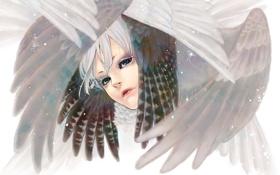Картинка крылья, перья, Лицо