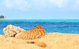 Картинка песок, море, пляж, ракушки, beach, sea, sand