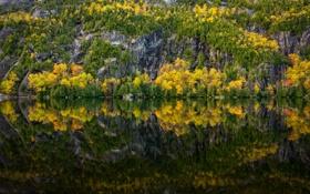 Картинка осень, лес, деревья, природа, озеро, отражение, река
