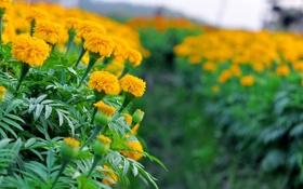 Обои цветы, цветение, flowers, кустики, shrubs, flowering