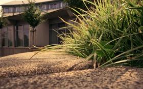 Обои трава, макро, деревья, дом, бордюр, house, grass