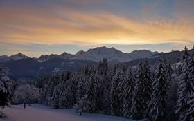 Картинка winter, tree, snow, mont-blanc
