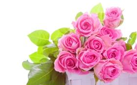 Обои бутоны, розы, розовые