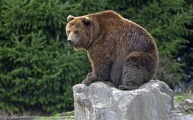 Картинка мишка, медведь, камень