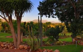Картинка деревья, камни, пальмы, газон, кактусы, ЮАР, South African National Park