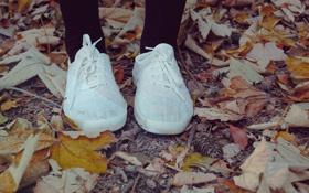Картинка осень, листья, обувь, кеды, колготки