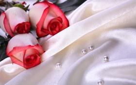 Картинка цветы, розы, шелк, три, ткань, жемчуг, атлас