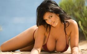 Картинка пляж, грудь, denise milani