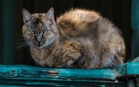 Картинка кот, глаза, котяра, кошак, взгляд