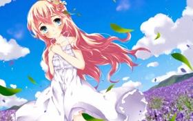 Картинка поле, девушка, цветы, платье, арт, vocaloid, megurine luka