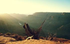 Обои река, дерево, пустыня, каньон, сухое