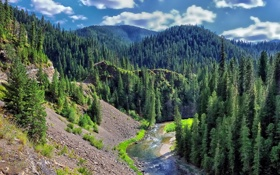 Обои зелень, лес, деревья, река, холмы, вид, ель