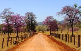 Картинка Гояс, поле, забор, ферма, дорога, деревья, Санта-Барбара