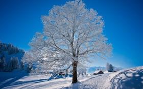 Картинка дорога, мороз, природа, снег, зима, дерево