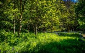 Картинка зелень, лес, лето, трава, деревья, цветы, тропинка