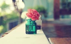 Обои flower, macro, awesome, amazing, zoom, cool, nice