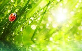 Обои трава, вода, капли, макро, лучи, природа, роса