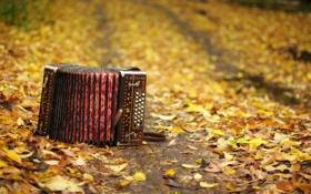 Обои осень, листья, музыкальный инструмент, гармонь