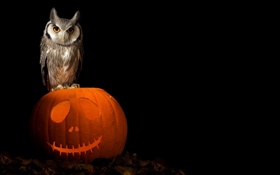 Обои art, pumpkin, owl, halloween