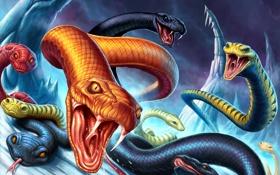 Обои скалы, рептилии, змеи, острые, пасть, арт, лед
