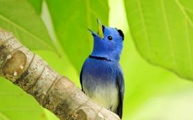 Обои лист, птица, цвет, ветка, перья, клюв