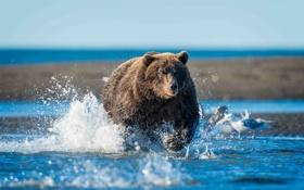 Обои природа, река, медведь