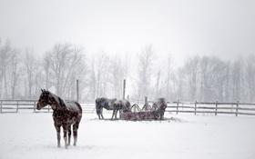 Обои зима, снег, кони