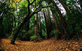 Обои зелень, осень, лес, природа, листва
