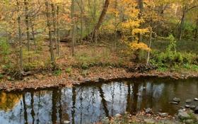 Картинка ручей, лес, осень, камни