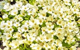 Картинка цветение, весна, spring, flowers, blossom