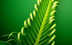 Обои природа, лист, завиток