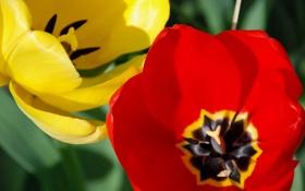 Обои природа, цветок, желтый, лепестки, красный