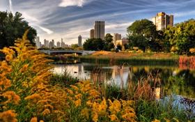 Картинка осень, город, озеро, парк, Chicago, Lincoln Park