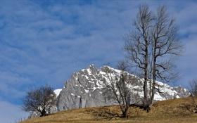 Картинка небо, природа, дерево, гора