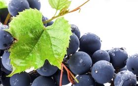 Картинка листья, капли, синий, роса, ягоды, чёрный, berry