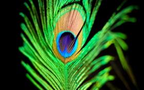 Обои 2560x1600, узоры, colors, павлин, macro, feather, краски