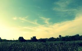 Картинка пейзаж, горизонт, небо, поле, зелень, травка, деревья