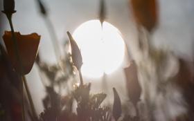 Картинка лето, солнце, макро, цветы, боке