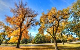 Картинка листья, осень, трава, деревья, дорога, небо, парк