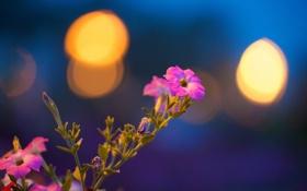 Обои листья, свет, блеск, лепестки, стебель, блик, петуния