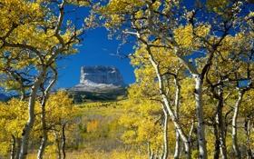 Обои осень, монтана, гора