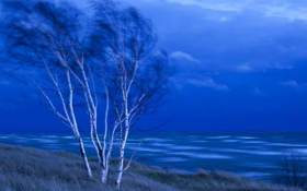 Обои море, небо, деревья, тучи, ветер, вечер, березы