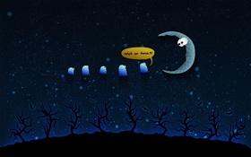 Обои звезды, деревья, луна