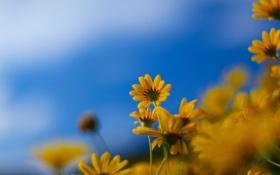 Обои цветок, цветы, природа, весна, цветки, full hd, весенние обои