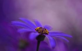 Обои природа, цветок, краски, лепестки