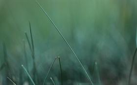 Картинка зелень, трава, макро, природа, green, размытость, травинка